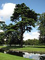 Hampton Court Palace (3036998533).jpg