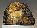 Harvard Museum of Natural History. Goethite. Negaunee, Marquette Co., MI (DerHexer) 2012-07-20.jpg