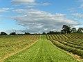 Hay-meadow, Strageath - geograph.org.uk - 200291.jpg