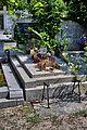 Helena i Edward Kowalczyk grave.jpg
