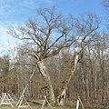 Helincheneiche - panoramio.jpg