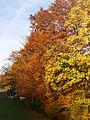 Herbst.6634.JPG