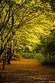 Herfstkleuren Laarbeekbos.jpg