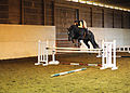 Highmark Farms - Sam Jumping (4590545708).jpg
