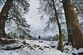 Himalayan Journey.jpg