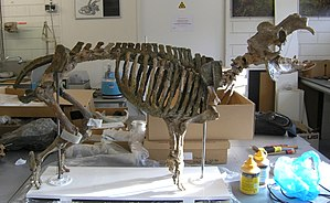 Cyprus dwarf hippopotamus - Composite mounted skeleton of H. minor