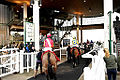 Horse At Aintree (8593985801).jpg