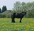Horse on Aylestone Playing Fields - geograph.org.uk - 799191.jpg