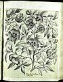 Hortus Eystettensis, Vorzeichnungen (MS 2370 2952638) -Aestiva,0,11.jpg