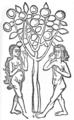 Hortus sanitatis.png
