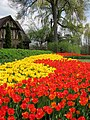 House With Tulips (70693561).jpeg