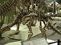 Huayangosaurus taibaii.jpg