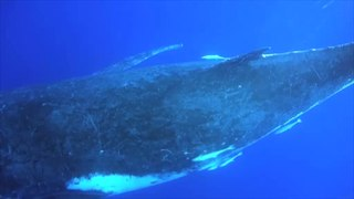 Whale vocalization Sounds produced by whales