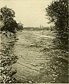 Hunting and fishing in Florida - including a key to the water birds known to occur in the State (1896) (14748772504).jpg