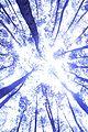 Hutam Pinus Mangunan.jpg