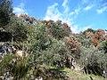 Il trionfo della natura d'inverno - panoramio.jpg