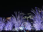 Illuminated trees in front of Hakata Station 20141225-1.JPG