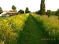 Ilvesheim, Germany - panoramio (8).jpg