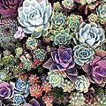 Incredible succulents pt 2. (14857217026).jpg