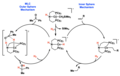 Inner Vs Outer Sphere Mechanisms.png