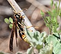 Insect of some kind (33206336233).jpg