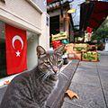 Istanbul Kitty (3955643060).jpg