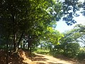 Itupeva - SP - panoramio (3013).jpg