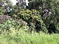 Itupeva - panoramio (204).jpg
