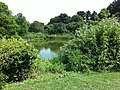 Jamaica Hills - Pond, Boston, MA, USA - panoramio (43).jpg