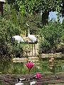Japanese garden israel kibutz heftzi-ba 9.JPG