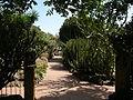 Jardín canario 33.JPG
