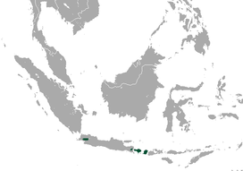 Javan Tailless Fruit Bat area.png
