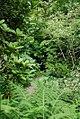 Jerôme Leuba - Portrait dans la nature.jpg