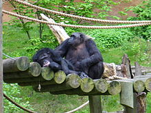 john ball zoological garden wikipedia