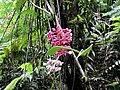 Jungle Flower.jpg