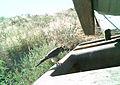 Juniper Dunes Critter Cam (21468822256).jpg