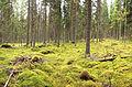 Jyväskylä - forest.jpg