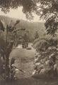 KITLV - 80038 - Kleingrothe, C.J. - Medan - Botanical Gardens in Penang Island - circa 1910.tif