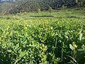 KPK village 02.jpg