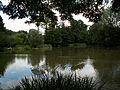 Kaczencowa Pond Nature reserve,Nowa Huta,Krakow,Poland.JPG