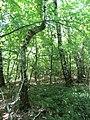 Kaniv Nature Reserve (May 2018) 25.jpg