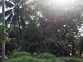 Kavuduwawa, Sri Lanka - panoramio (1).jpg