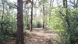 Keston Common - Woodland
