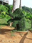 Ko Chang - Elephant en herbe.JPG
