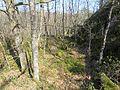 Krsand randesund Kvarenes eikeskog IMG 3695.JPG