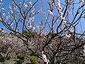 Kunō plum-grove park 03.jpg
