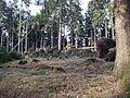Kyrill-Schäden-10.JPG