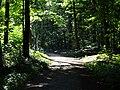 LSG Waldgebiet des Tiergartenwaldes PM-18-00.jpg
