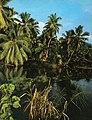 La Digue coconut palms.jpg
