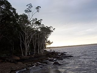 Lake Cootharaba lake in Australia